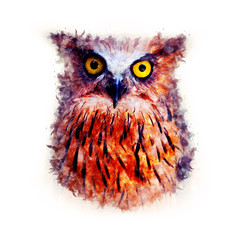 Owl Watercolor painting Art