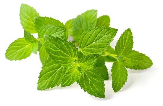 fresh herb, peppermint isolated on white