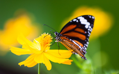 Butterflies and colorful flowers.