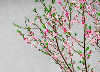 Branches with sakura flowers on a gray background