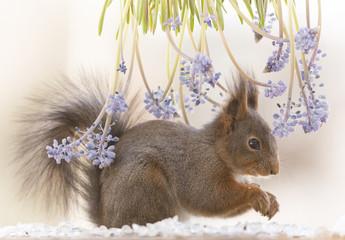 red squirrel standing under flowers
