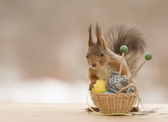 red squirrel is a holding basket with knitting needles