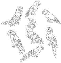 Collection of amusing tropical parrots, black and white vector illustrations in a cartoon style for a coloring book