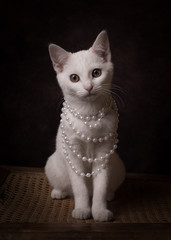 Studio portrait of cat wearing pearl necklace