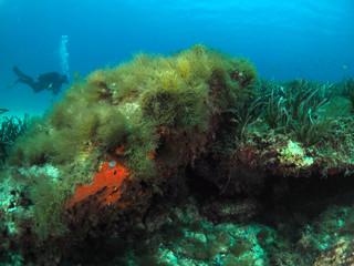 Scuba Diving Malta - Exlis Reef, Sliema