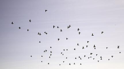 Birds flying heaven