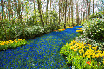 A blue river in the forest, formed from flowers.