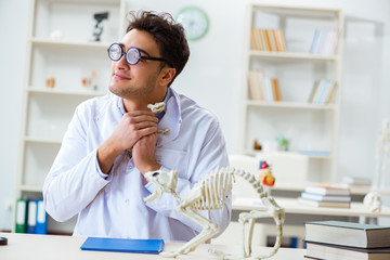 Funny crazy student doctor studying animal skeleton