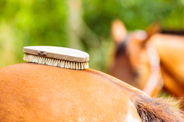 Person taking care of horse, brushing grooming animal