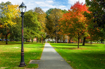 Empty Path Lined with Old Fashioned Street Lights and Colourful Autumn Trees in a Public Park on a Sunny Day