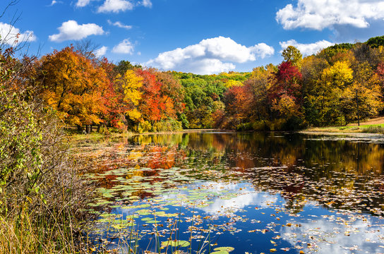 Pond Surrounded by Colourful Trees on a Sunny  Autumn Day. Beautiful Autumn Colours and Reflection in Water.