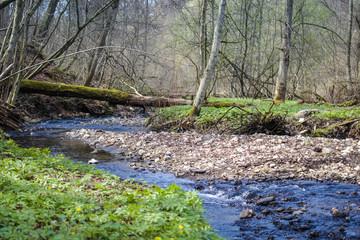 Forest stream in the ravine