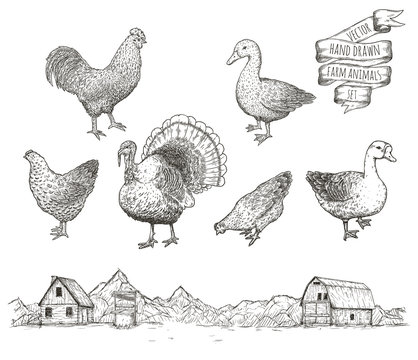 Collection of farm poultry.