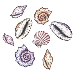Cartoon seashell illustration.