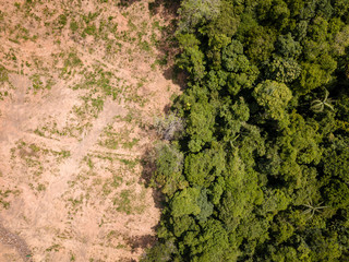 Aerial drone view of deforestation of a tropical rain forest to make way for palm oil and...