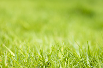 The natural green background of the grass.