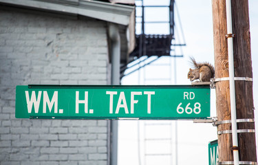 Squirrel on a Street Sign