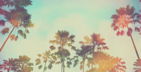 Vintage palm tree and blue sky