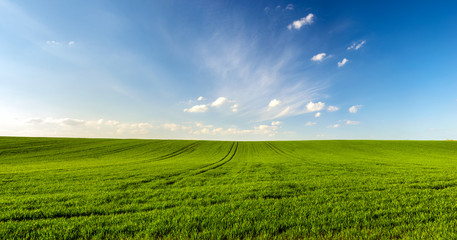 Aluminium Prints Village spring landscape panorama,green wheat field