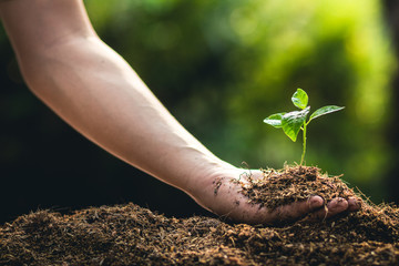 Planting trees growth passion fruit and hand Watering in nature Light and background