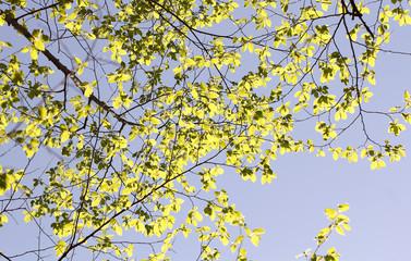 фоновое изображение ветки молодого дерева и небо