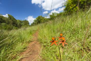Wall Mural - Orange Flower In Karura Forest, Kenya