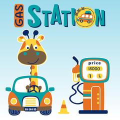Funny giraffe on little car, filling gasoline, vector cartoon illustration