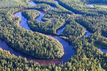 Forest plain river