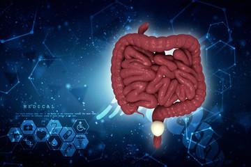 3D illustration of human Large Intestine