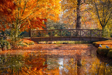 Wooden bridge in bushy park with autumn scene Wall mural