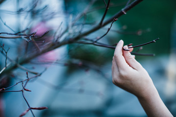 Hand touching leafless branch
