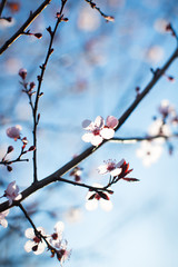 Branches with soft blooming flowers