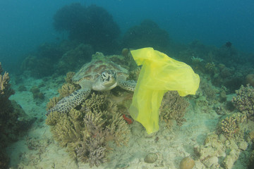 Plastic pollution in ocean. Turtles can mistake carrier bags for jellyfish and try to eat them