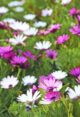 white and purple flowers in a flowerbed