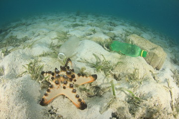 Plastic water bottles discarded in ocean pollute coral reef