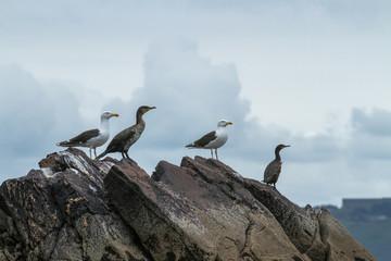 Birds on sea rock
