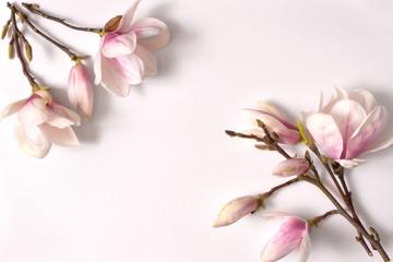 Obraz ramka kwiatowa,magnolia, kwiat, klimat, magnolia, drzew, kwiat, biała, galąź, kwiatowy, kwitnienie, flora, bliska, jardin, feuille, pora roku, pąki magnolii, biały, tło z magnolią, ozdoba, ornament - fototapety do salonu