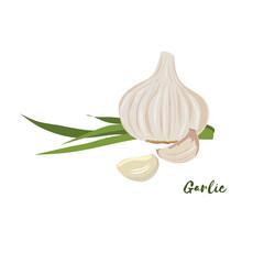 Garlic. Flat design. Vector illustration.