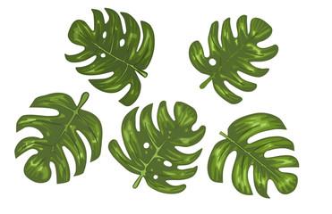 5 Monstera Tropical Leaves Vector Illustration