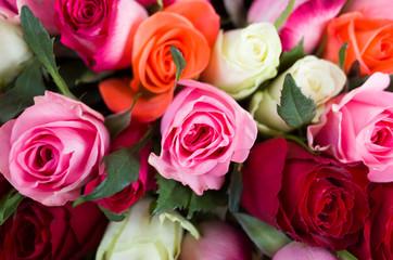 roses mélangées