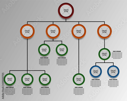 Business hierarchy organogram chart infographics  Corporate