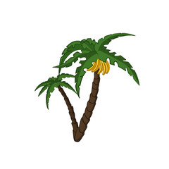 Banana palm tree in cartoon style. Exotic tropical plant. Isolated image