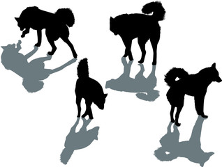 four black dogs with shadows
