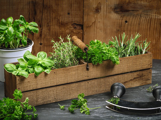 Herbs in old wood box