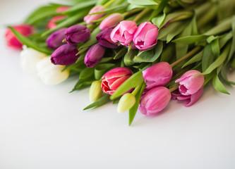 tulips on isolated white background