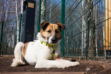 Cage for dogs in animal shelter