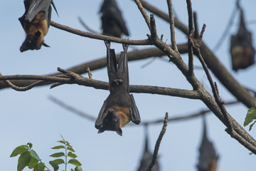 The bat is hanging head on a branch.
