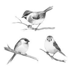 Birds, isolated on white. Black and white watercolor illustration