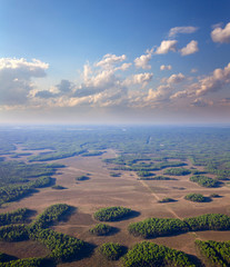 Forest plain in summer, top view