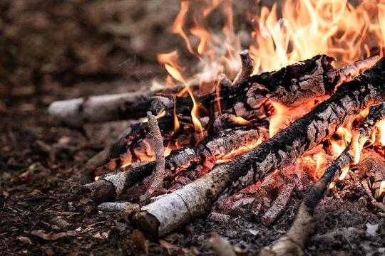 Bonfire closeup.